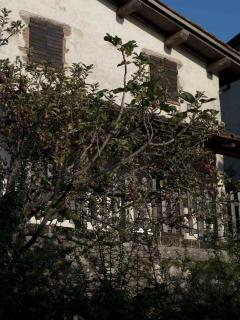 Il melo situato nel piccolo giardino sotto la terrazza