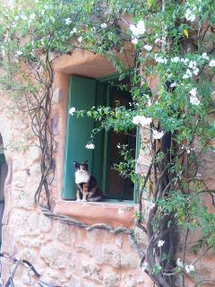 ~ and perhaps one of Assignan's village cats