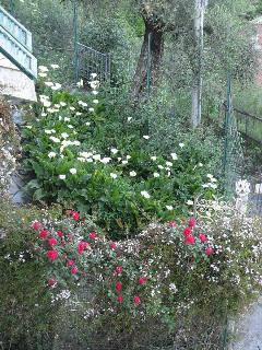 La fioritura di maggio