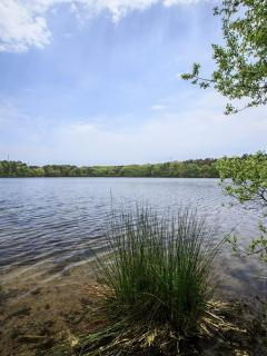 Flax Pond (rated 2nd best pond on Cape Cod). Use our kayaks or swim in the crystal clear water.