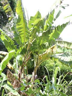 Garden (5,200 sq metres/ 1.5 acres)
