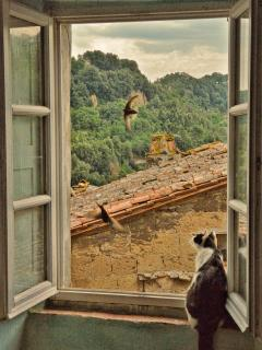 Tirone communing with the swifts that nest above a window of my home.