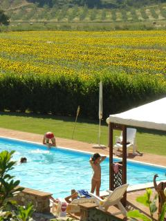 La piscina..  sullo sfondo i girasoli.