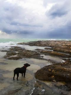Pat's dog, Siyah, enjoying the rock pools