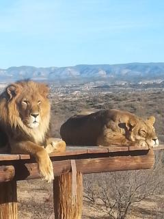 wild animal park near Cottonwood a 30 minute drive