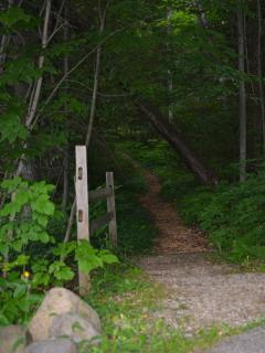 Trail from the resort to Beach Drive