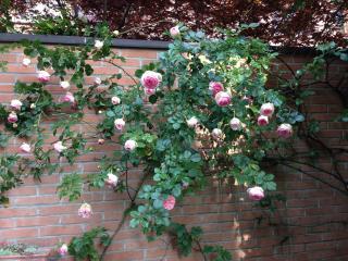 appartamento con giardino privato di 400 mq., Monza