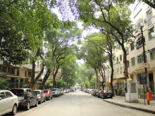 A tree friendly street