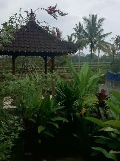 Next to large rice field terrace.  No need for a  tour.