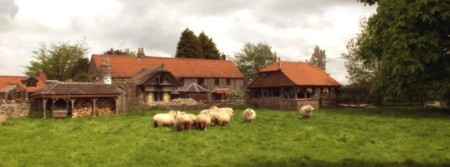 Sheep on the our Green in front of Spindle Cottage. They have come for a holiday as well, how nice.