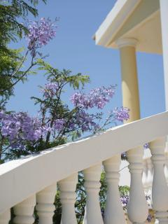 Jacaranda staircase to upper terrace