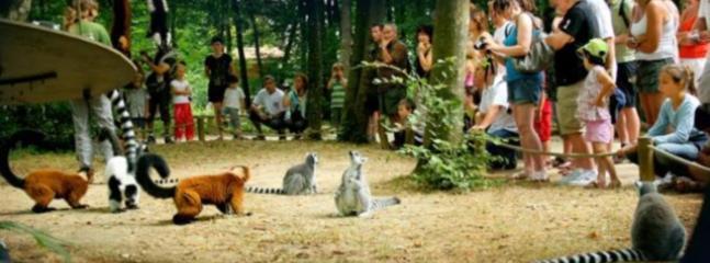 La Vallée des Singes - Monkey Valley