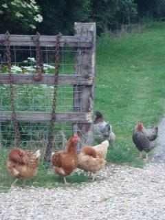 Hens & Chickens at Jockhedge