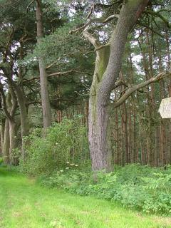 We are surrounded by waymarked footpaths, Cropton Forest is open access so great walks..