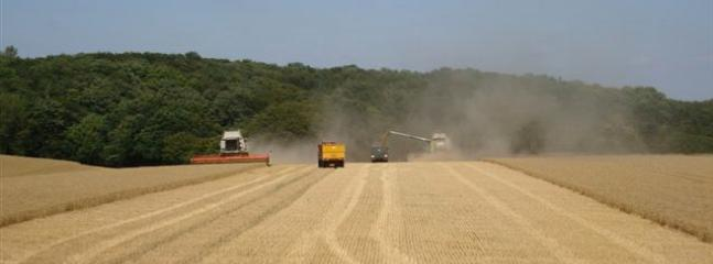 Harvest time in field adjoining  Wellrose