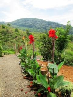 Guests will enjoy the terraced garden with colourful flora