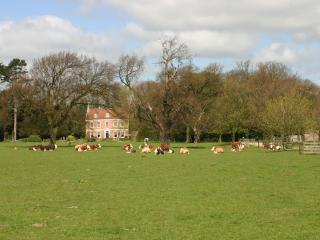 The Park and cattle in front of Brackenborough Hall