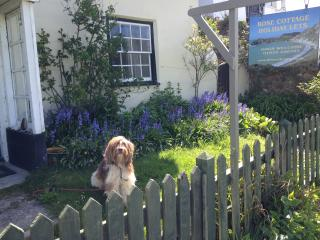 Dogs Welcome at Rose Cottage!