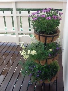 Deck  area floral display