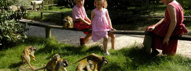 Enchanting Vallee des singes get up close and feed the monkeys