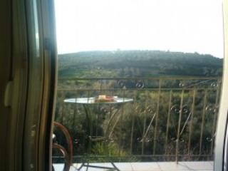 tzamika/ olive tree farm next to the sea  /apart