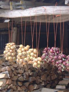 Onions drying in the wood shed