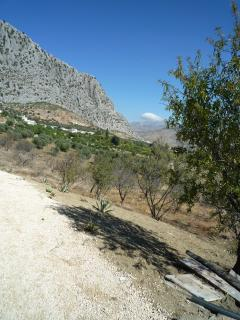View to East, almond & olive trees.
