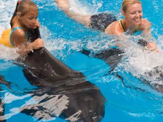 Enjoy an unforgettable magical swim with dolphins