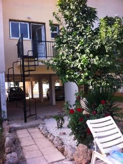 back of house up from the pool, citrus tree, garden