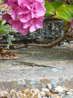 One of our garden visitors.