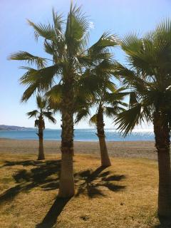 Shade on the beach under the Palm trees in Torre del Mar