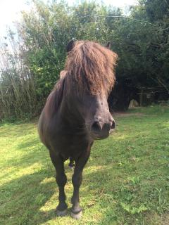 This is Mally one of two shetland ponies we look after, the other is called Teddy.