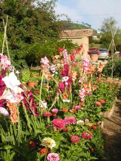 Villa Flower Garden-The Cutting area