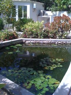 Another Fish Pond