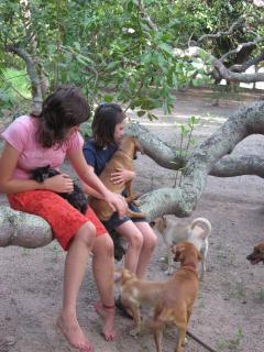 Sítio Folha d´Água: Loving dogs