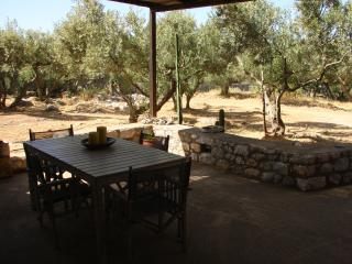 Garden view of the olive trees (ground floor).