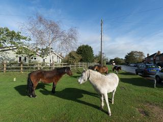 Wild ponies and donkies roam through the villages.