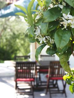 The orange blossom smells out of this world! We also have  fig, loquat, pomegranate and olives!