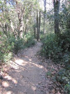 Pathway in nearby Alberes hills