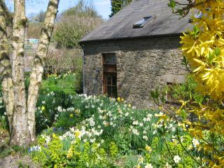 Springtime with a host of daffodils - pick some for your cottage table if you like