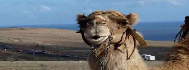 Visit the camel and horse park only a 10 min drive from our villa