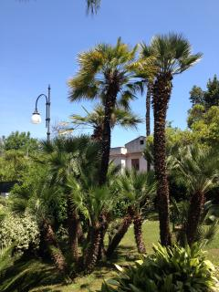 Garden around the villa