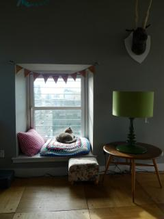A lounge view with the best view of our wee cat!