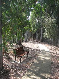 Walk through eucalyptus forrest to beach