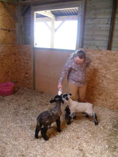 Guests are welcome to meet our own pet lambs, pony and chickens