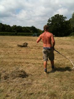 Are you wanting to help with hay making?