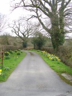 Driveway to the cottage in the spring