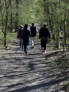 Walking in the ancient woodlands - a popular pastime for our guests