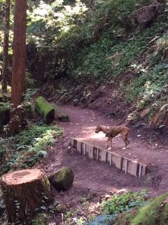 Hike through the majestic redwoods!