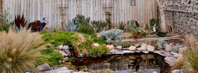 Soothing coy pond